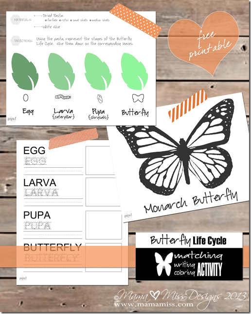 Butterfly Life Cycle by Mama Miss
