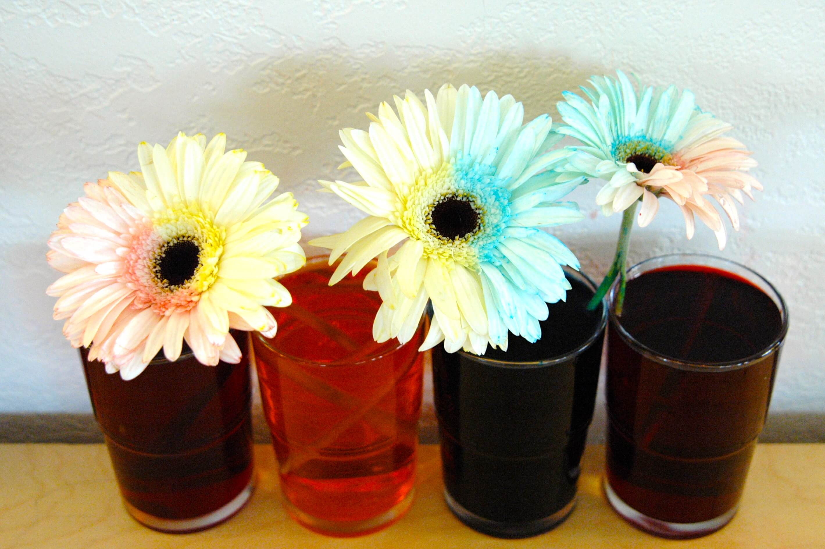 Bicolor flowers playdough to plato for How to dye flowers using food coloring