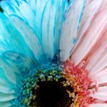 Bicolor Flowers