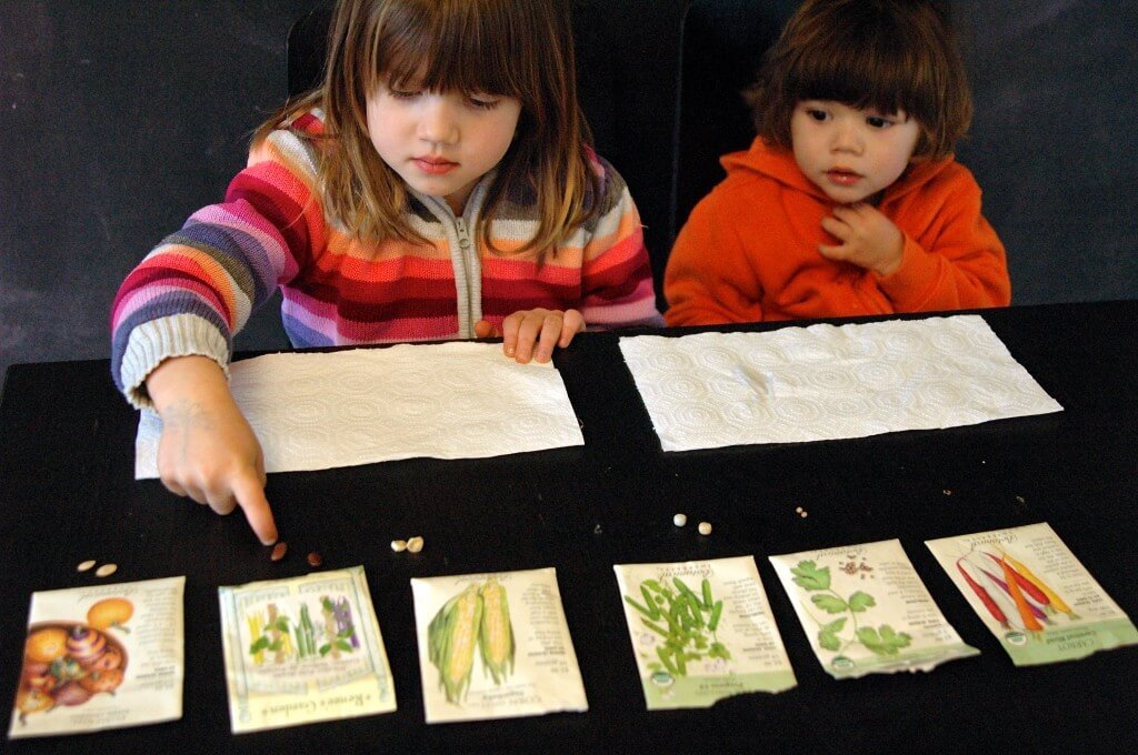 Growing seeds with toddlers. {Playdough to Plato}