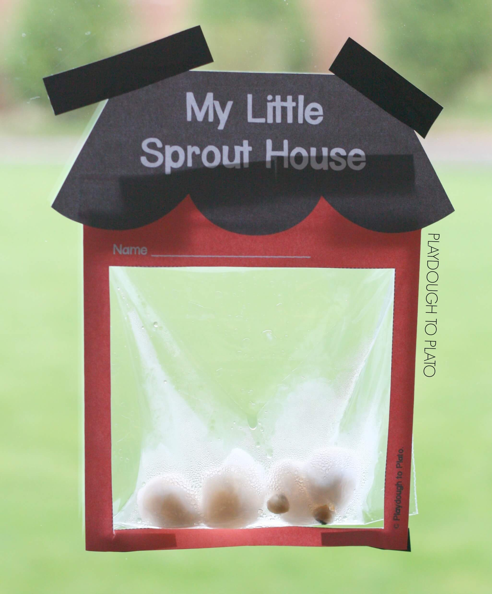 My Little Sprout House