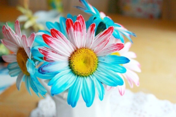 How-to-Dye-Flowers-with-Two-Colors-2