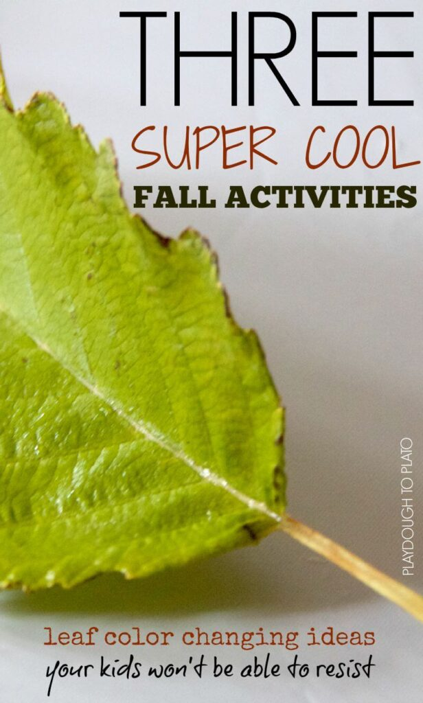 Fall Leaf Activities for Kids