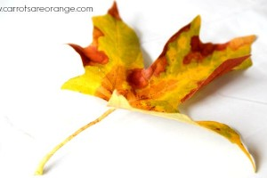 Why Leaves Change Color