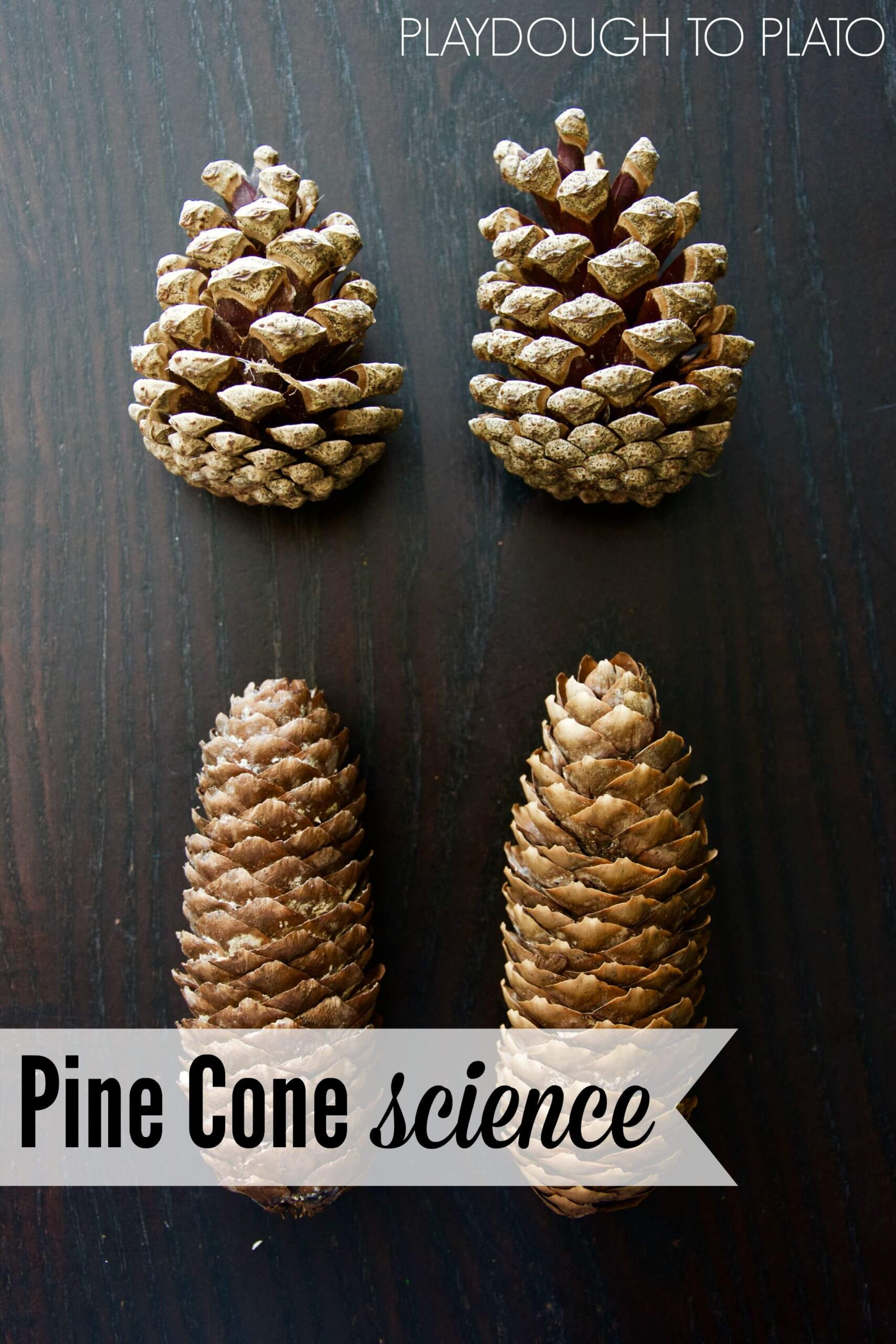 Pine Cone Science