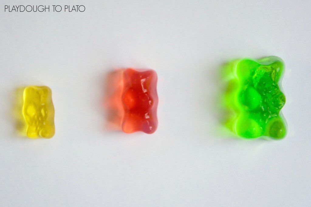 Growing Gummy Bears! Cool candy science experiment for kids.