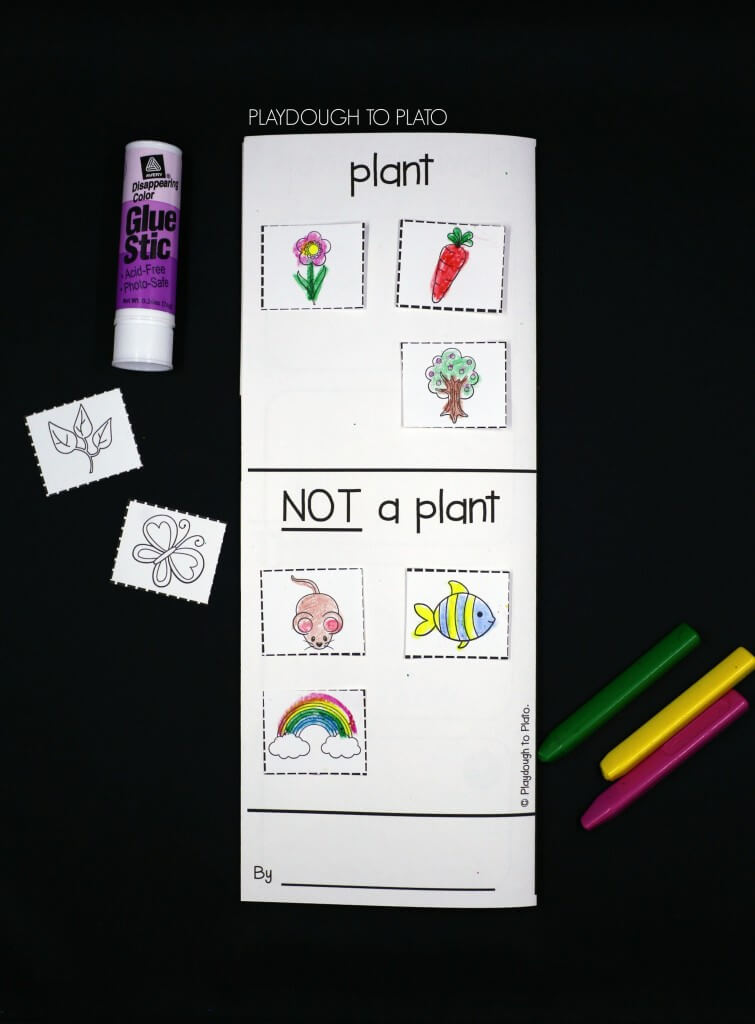Sort objects into categories plants and not plants.