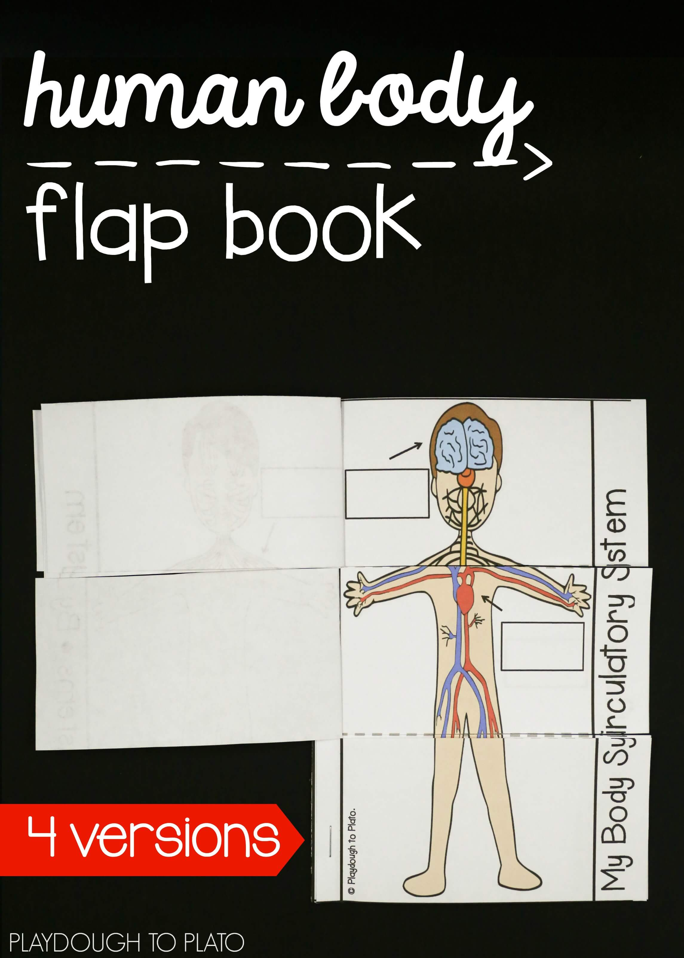 Human Body Systems Pack Playdough To Plato