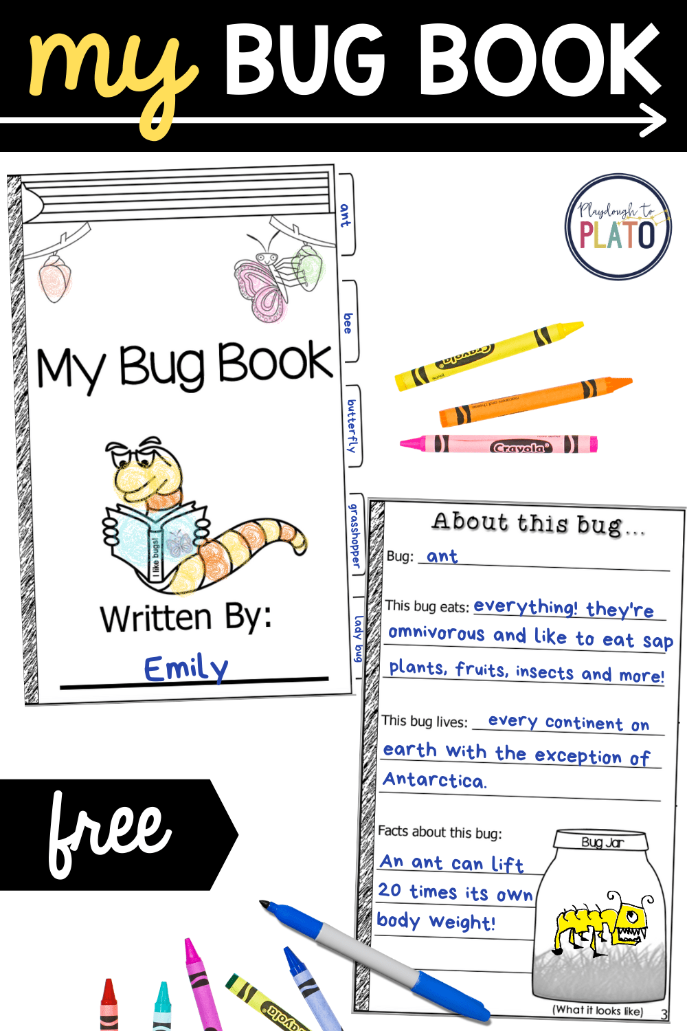 My Bug Book Activity