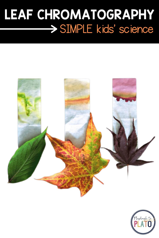 Leaf Chromatography Activity